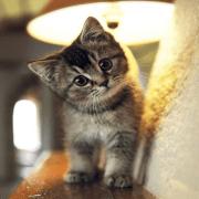gatito pose