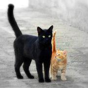 Gato negro y naranja