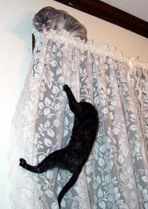 gato en cortina