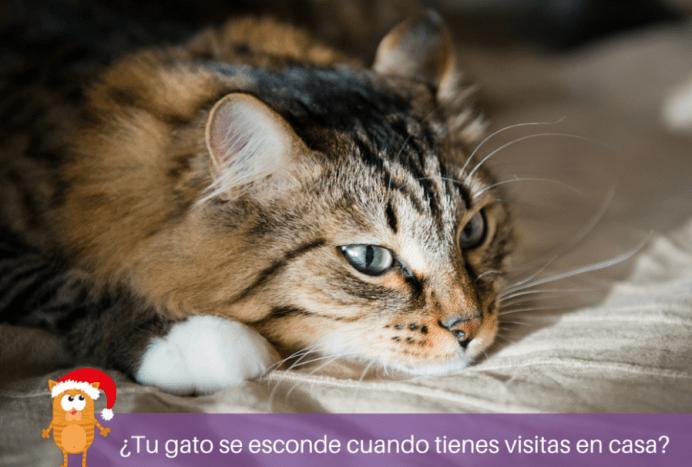 Feliway - Si tu gato se esconde porque tiene miedo