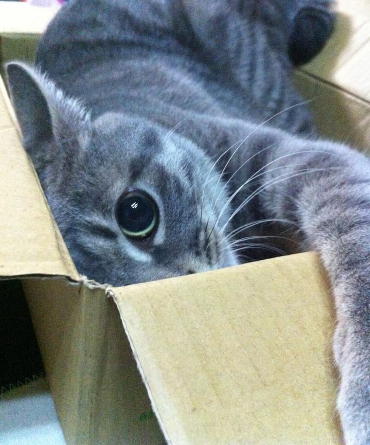 Feliway espa a nos mudamos de casa a piso c mo habituar a nuestro gato - Casa gatos exterior ...