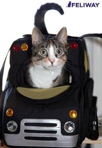 Gato en Transportín;