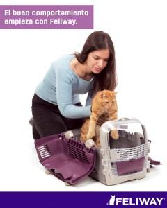 Gato en transportín GEMFE