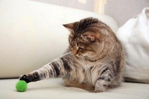 La actividad que desarrollan los gatos para cazar es todo un ritual y no tiene por qué estar relacionada con que tengan hambre
