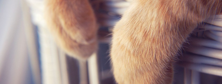 Feliway - zarpas de gato