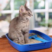 Trucos para escoger el arenero adecuado para tu gato