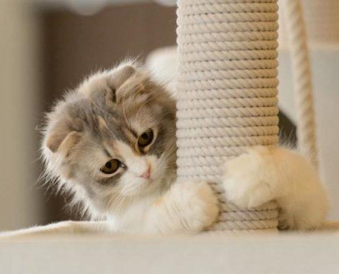 Rascadores para gatos y Feliscratch de Feliway