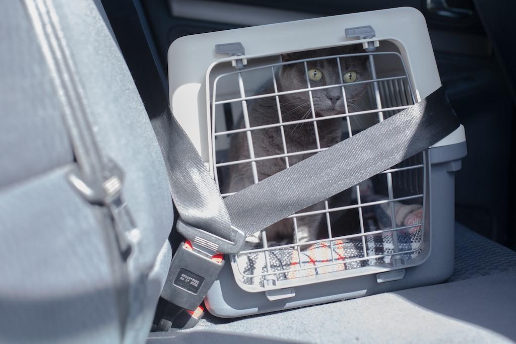 Viajar en coche con mi gato