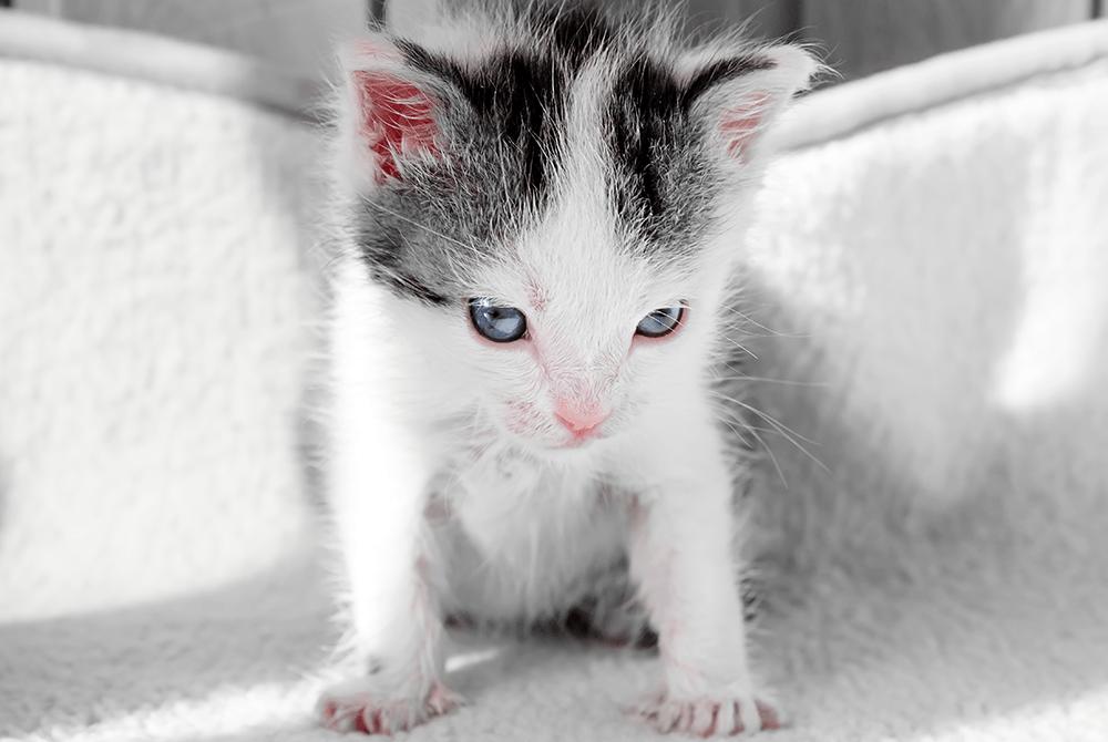 Gatito recién llegado a casa