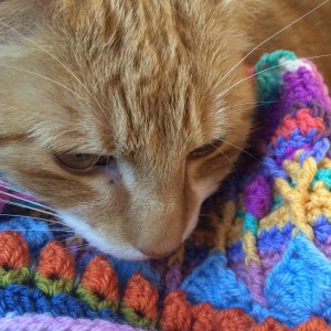 Sophie's universe blanket with a cat