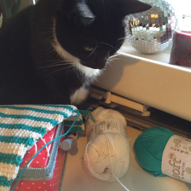 Cat staring at yarn