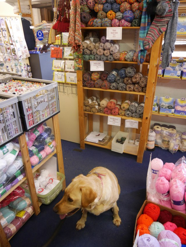 Labrador in a yarn shop