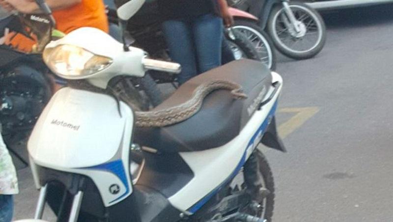Dos chicas circulaban en una moto con una víbora de 1.50 metros
