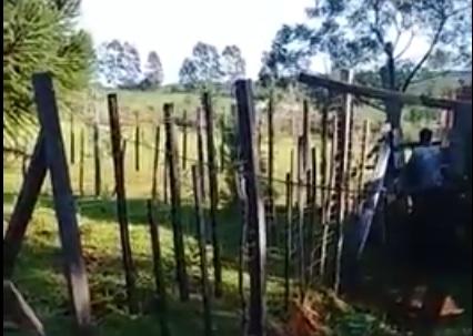 Lo filmaron violando a la vaca de su vecino y acabó denunciado