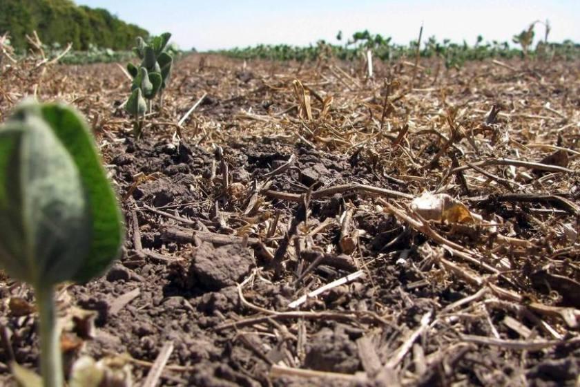 La cosecha de soja finalizó con una caída del 37,4%: pérdidas de u$s4.200 millones