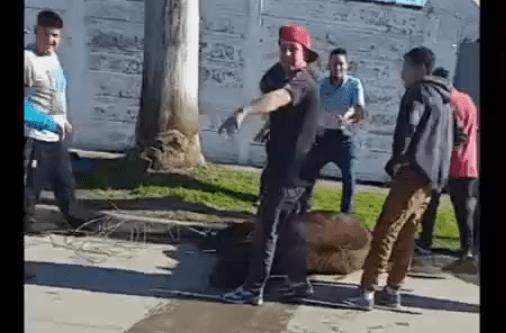 Toros descontrolados: Uno arrolló a una mujer en plena calle y otro fue sacrificado por los vecinos