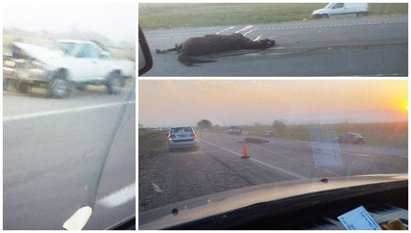 Autopista a Famailla:  Una camioneta atropella y mata a Jinete y su caballo