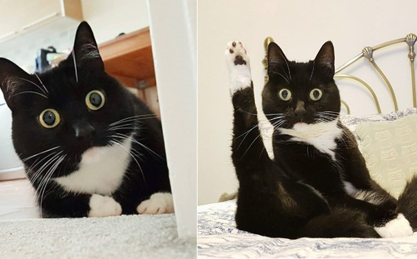 """La gata con """"cara de asombro"""" que es furor en las redes sociales"""