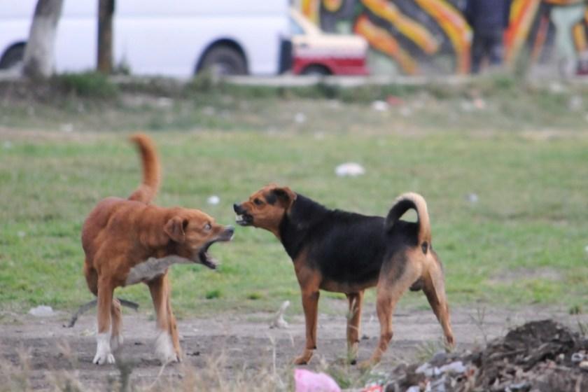 San Juan: Murió un niño atacado por perros callejeros