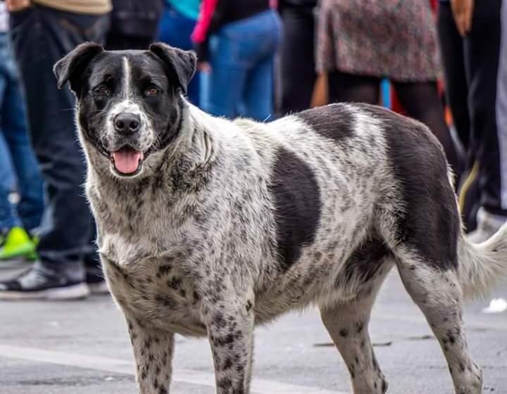 REDES: Hicieron una falsa marcha en Chile para lograr que un perro fuera al veterinario
