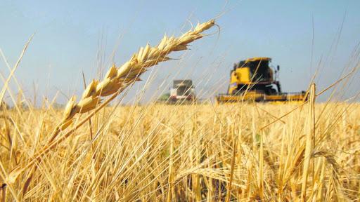 Trigo: Un campo bonaerense logró superar los 10.000 kilos por hectárea