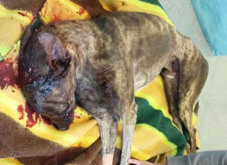 Un hombre será juzgado por maltratar a sus 4 perros
