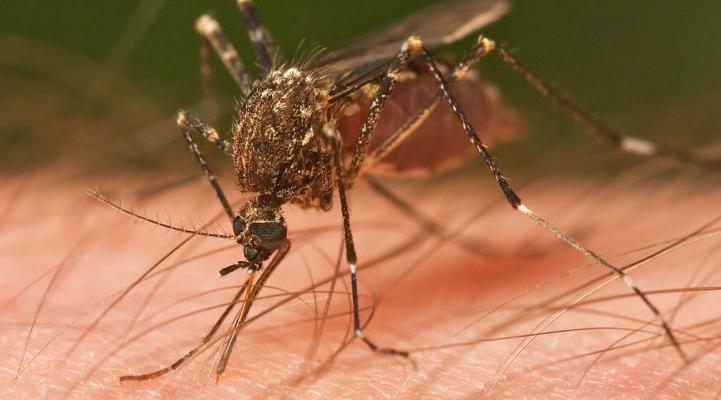 Tucuman: Confirman 353 casos de dengue