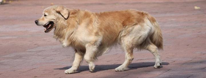 Castración de mascotas: conoce dónde se instalará el tráiler veterinario desde el lunes