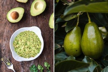 ¿ Quiere bajar de pesos ? : Estos alimentos ayudan a quemar grasa rápidamente