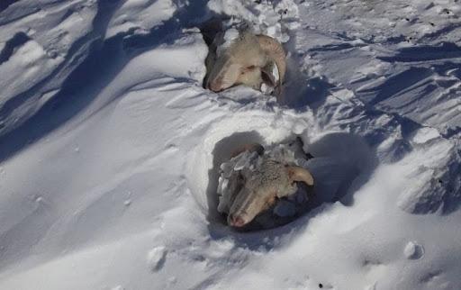 """Temporal de nieve y desazón en el sur: """"Muchos perderán todo su rodeo"""""""