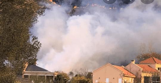 """Incendios en Cordoba: Tragica muerte de animales envueltos por el fuego en  """" Pekos"""""""