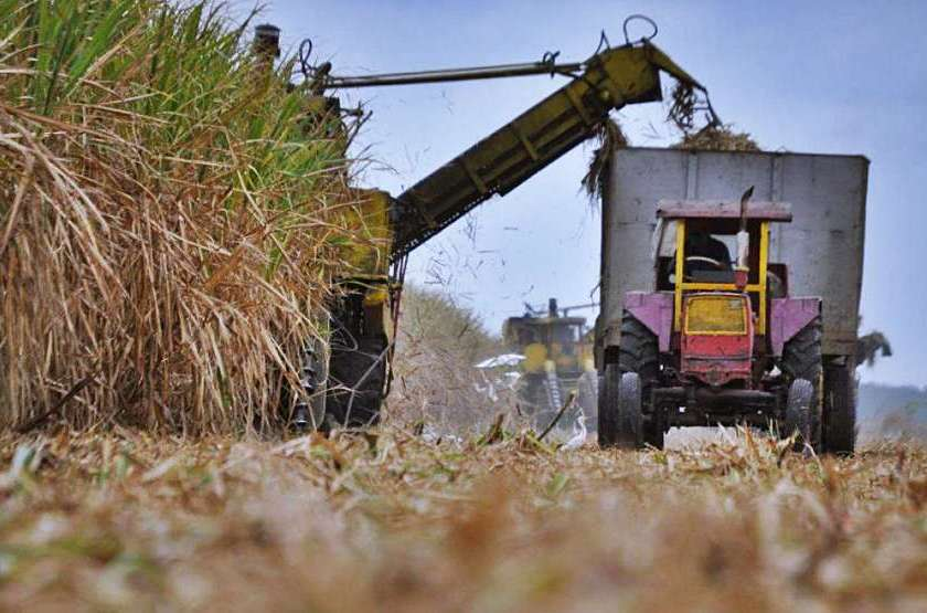 Zafra 2021: Comienzan la molienda los Ingenios La Florida y La Providencia