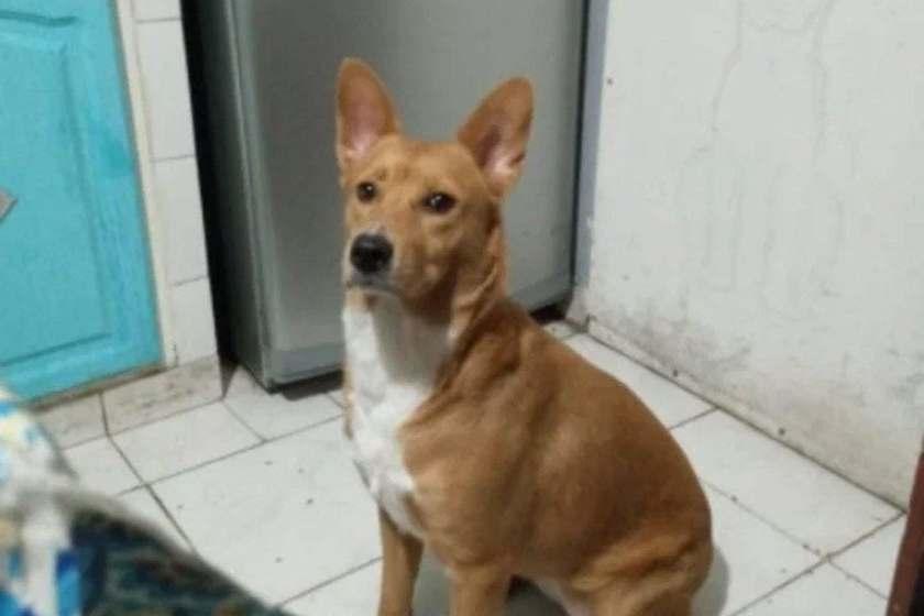 Un tucumano violó a su perra, le quitaron la tenencia, le impusieron una perimetral y no podrá tener animales hasta que se rehabilite