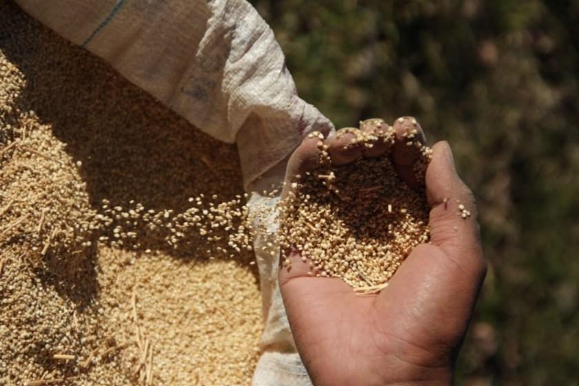 El gobierno nacional redujo los derechos de exportación de 67 nuevos productos de las economías regionales: 17 pasarán a tributar 0%