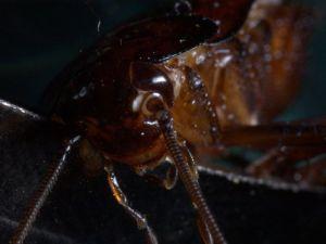 soñamos con cucaracha