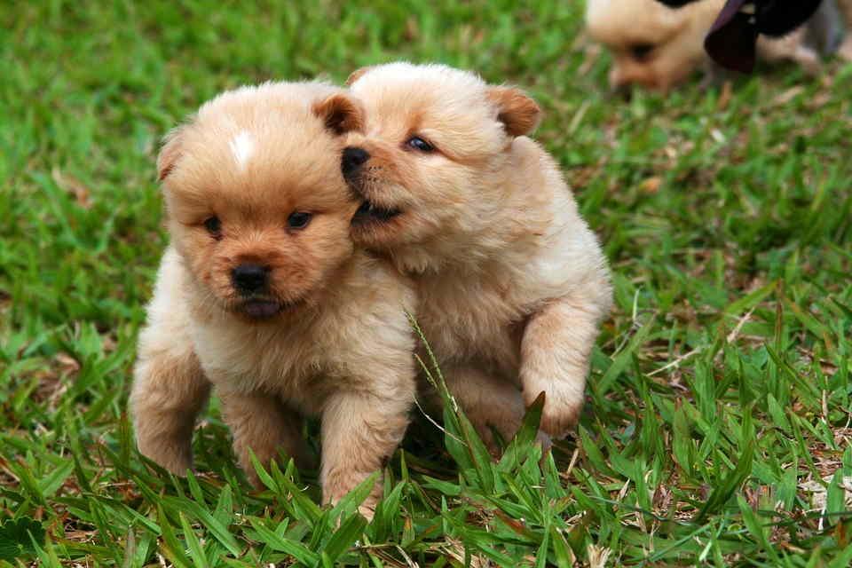 significado de soñar con animales cachorros