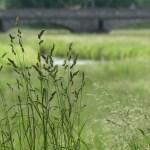 significado de soñar con hierba