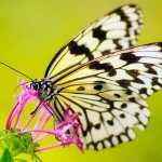 significado de soñar con mariposa