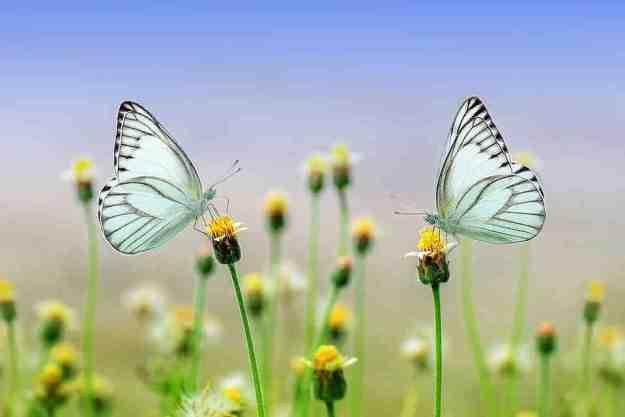 interpretación de sueños mariposas de colores