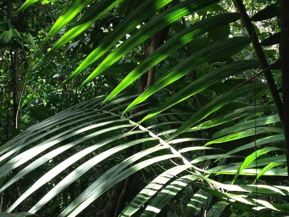 que significa soñar con selva
