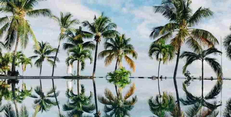 Soñar con muchas palmeras