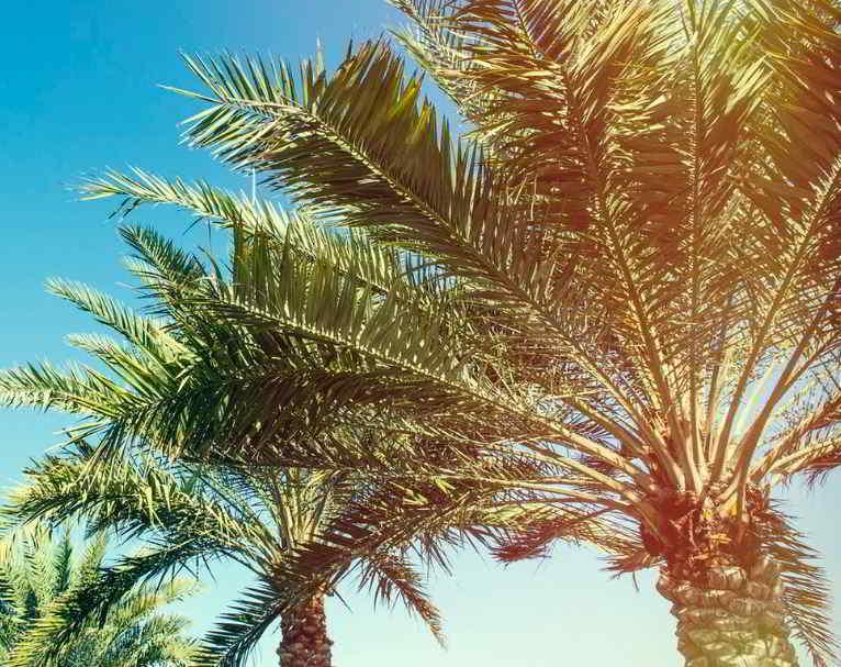Sueños con palmas llenas de cocos
