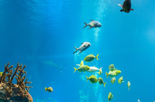 La imagen tiene un atributo ALT vacío; su nombre de archivo es mar-con-peces.jpg