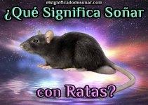 Qué Significa Soñar Con Ratas?