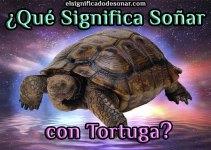 Qué Significa Soñar con Tortuga?