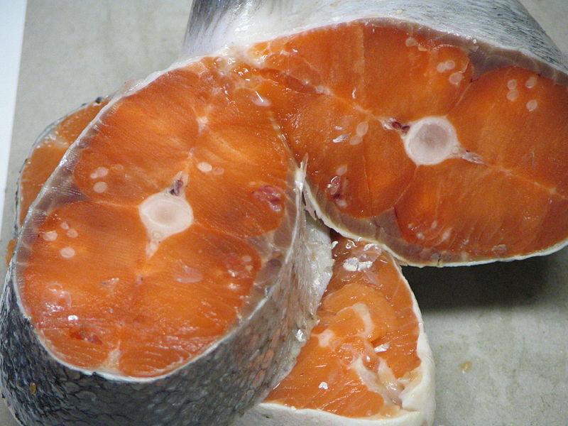 infección salmon