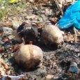 Investigan hallazgo de cráneos en La Vega