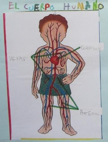 trabajo iker circulatorio