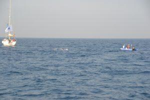 como cruzar el estrecho de gibraltar
