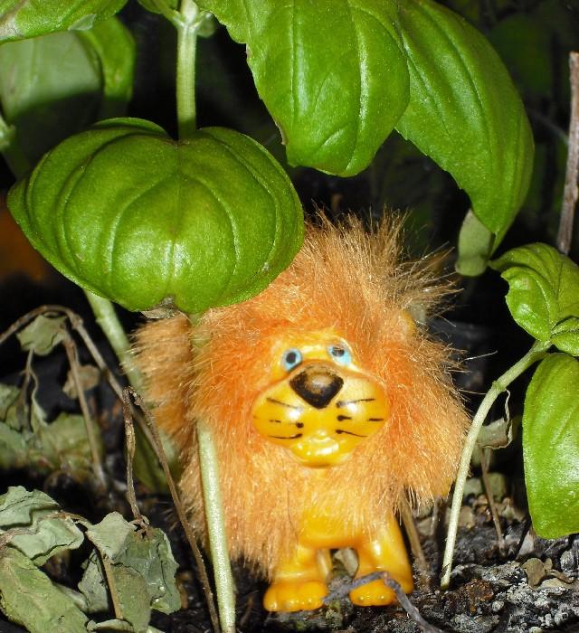Lev Leo in seinem Dschungel